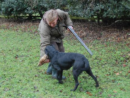Black Labrador Gundog With His Black Labrador